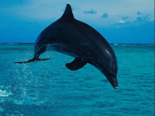 Q: experts say that dolphins may be able to detect this by using echolocation. What is it?