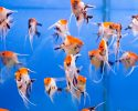 Photo of aquarium fish in blue water